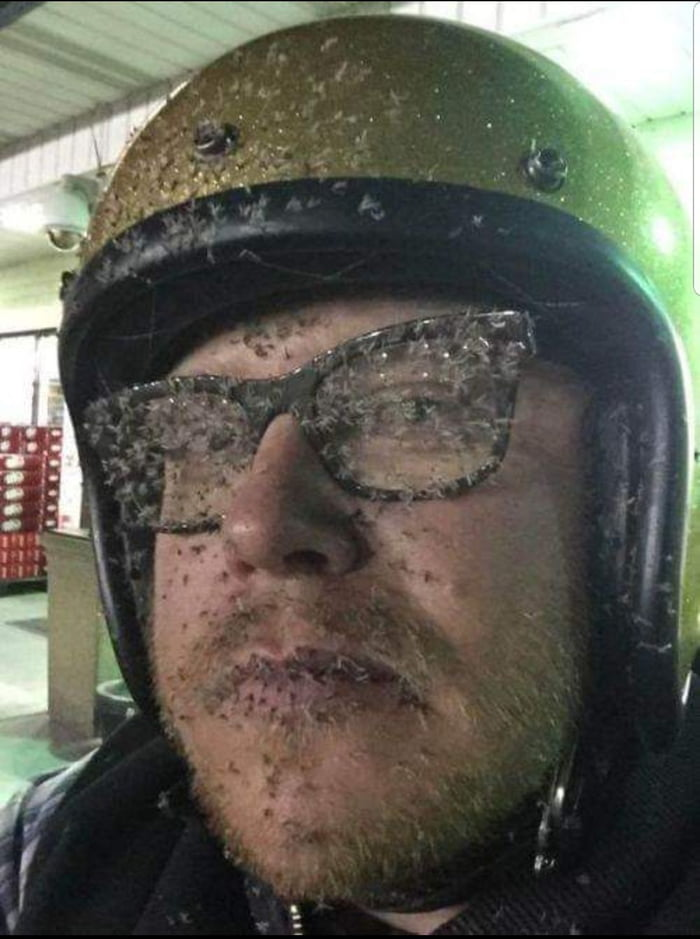 Name:  2019-01-12_bugs-on-a-guys-face-after-a-motorcycle-ride.jpg